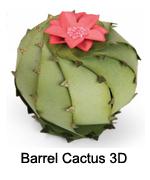 661931_Barrel_Cactus_3D