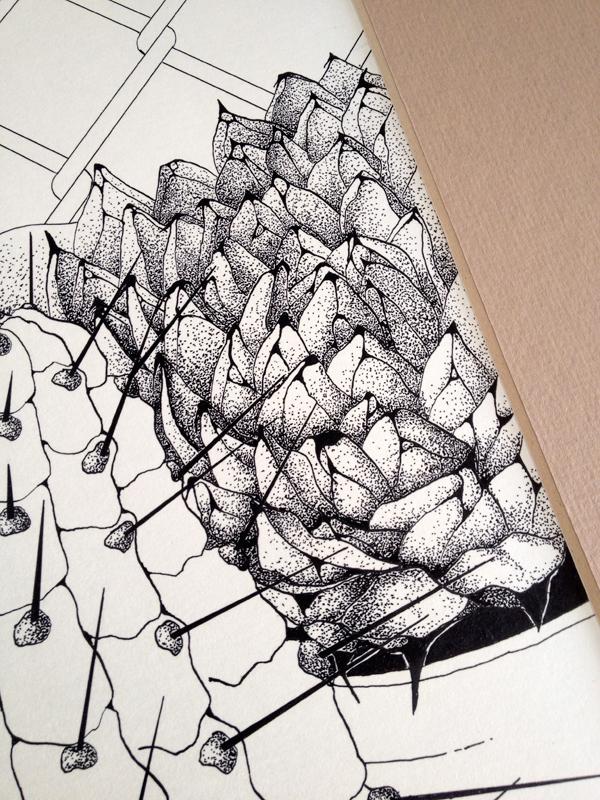 Succulent_detail
